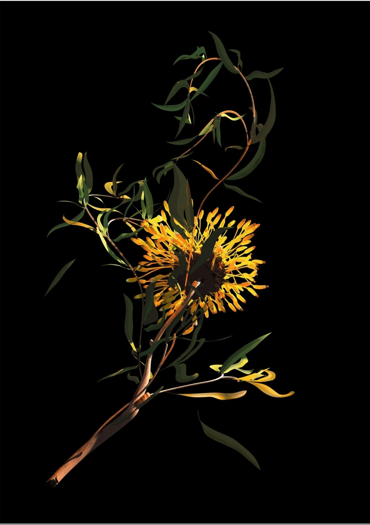 Australian Native Flower by Victoria Marquez
